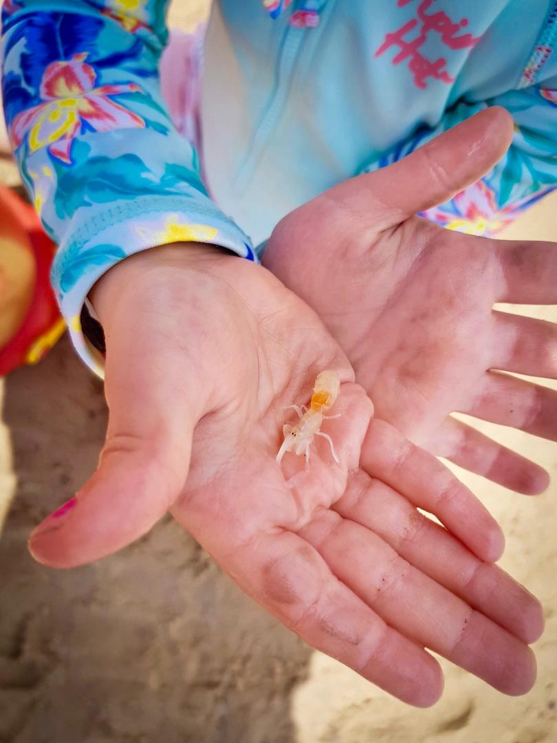 Beach Kindy - Suncoast Little Learner with shell fish